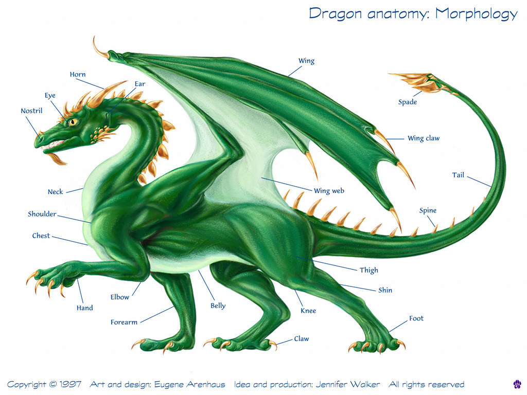 Dragon anatomy: Dragon anatomy - morphology