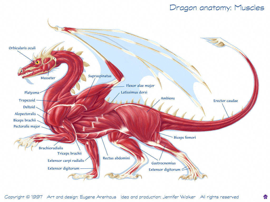 Anatomy of a dragon