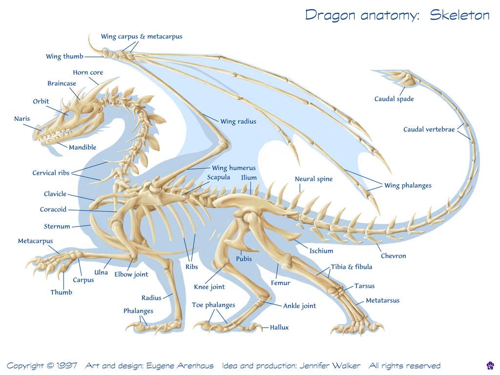 Dragon Internal Diagram - Electrical Drawing Wiring Diagram •