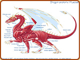 Dragon anatomy table thumbnail